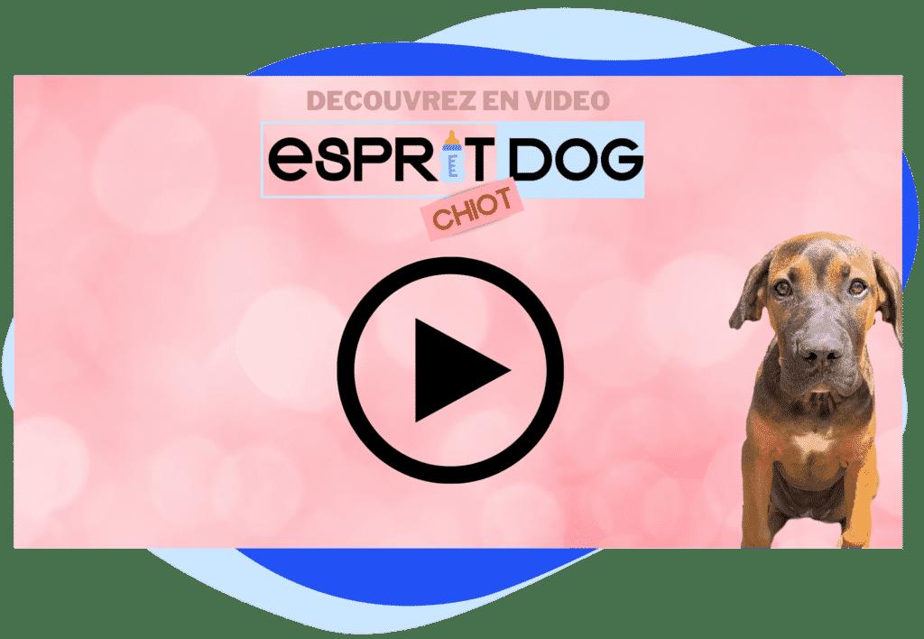Esprit Dog Chiot